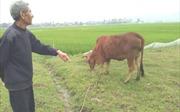 Vụ thu phí đồng cỏ ở Thanh Hóa: Yêu cầu trả lại tiền và xin lỗi người dân