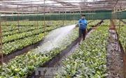 Sắp xếp, đổi mới các công ty nông, lâm nghiệp - Bài 1: Những điểm 'nóng'