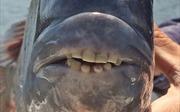 Phát hiện loài cá lạ có hàm răng giống người
