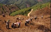'Chông chênh' công tác giảm nghèo bền vững