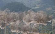 Khai mạc Triển lãm nghệ thuật cảnh quan Mây pha lê - La Pán Tẩn và Festival dù lượn