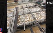 Cá nuôi chết hàng loạt trên sông La Ngà, Đồng Nai