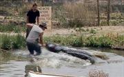 Suýt mất tay vì mải chụp ảnh cá sấu khổng lồ