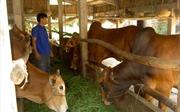 Tín dụng chính sách giúp đồng bào Khmer phát triển kinh tế