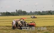 Thay đổi tư duy trong sản xuất nông nghiệp - Bài 1: Vì sao chậm?