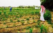Qatar hướng tới tự cung tự cấp thực phẩm