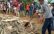 Dân làng hùng hổ tàn sát đẫm máu hàng trăm con cá sấu
