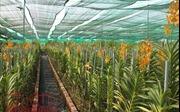 Sẽ tổ chức Fetival hoa lan lần đầu tiên tại TP Hồ Chí Minh
