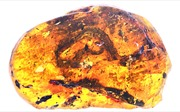 Phát hiện hóa thạch rắn cổ đại 99 triệu nămtuổi